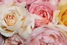 Flowers/Fleur/Kvety