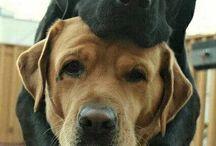 Najlepší kamaráti