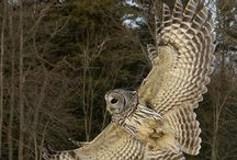 owls and other amazing animals