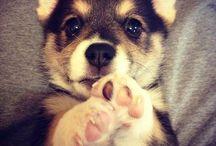 Just fluffy^^