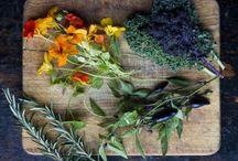 Bylinky, koření, semena - účinky, použití