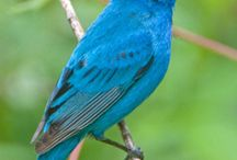 Backyard birds...South Eastern USA / Birds found in the eastern USA...South Carolina back yard birds..a birding journal