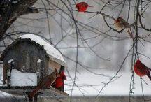 pretty winter
