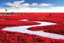 colour crush: red ❤️