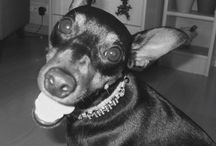 Minni and nelli / My dog