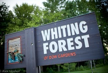 Whiting Forest / by Dow Gardens