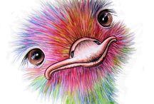 Struisvogels / Ostriches