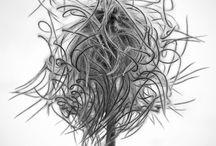 Flora / by Scott Cressman