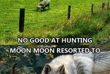 Moon moon is love