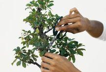 Bonsai / Itty bitty little trees