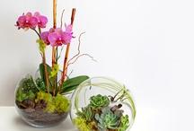 Indoor plants  / by Hyun Briski