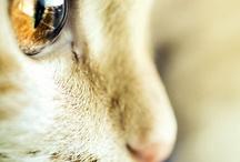 Kitties Galore!!