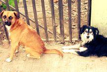perros / fotografia de perros