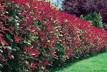 Kels garden dreams