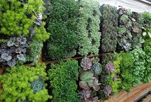 Vertical Gardening / Growing UP - Gardens grown vertically for visual interest and/or because of limited space.