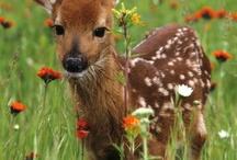 Bambi & friends / hertjes