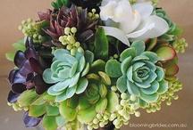 svatení květiny trochu jinak - sukulent