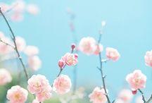 Mooie bloemen!
