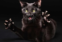 Famous People As Cats... / Making fun of cats and famous people. / by Jeanne M Powell