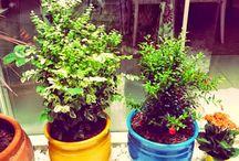 Dica organizada: Renove seu jardim e sua alma!