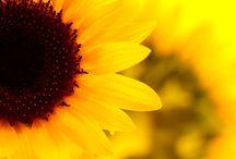 Garden & Flowers Ideas / by Serena