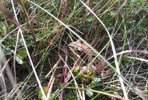 Reptiles and amphibians / Reptiles and amphibians seen when out on the moors and beyond!