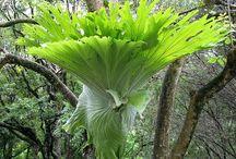 Szobanövények / Szobanövények, levéldísznövények, virágzó növények