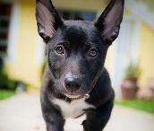 Doggy <3