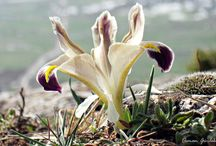 Nevruz | TRT avaz