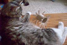 Homemade kitty toys!!!!