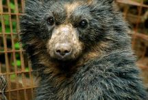 Bears / by The International Fund for Animal Welfare - IFAW