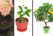 Κηπουρική και λουλούδια