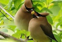 Avocations: Fly Fishing, Birding, Camping, etc. /    / by Regina Van Patten