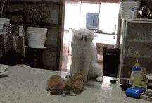 Love Funny Cat