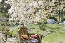 Outdoor_picnic
