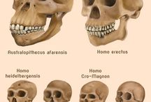 history human evolution