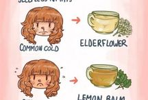 Tea Lover's Guide to Tea