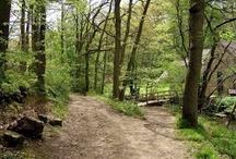 Wyre Forest / Wyre Forest Shropshire - http://wyrefarmed.blogspot.co.uk/