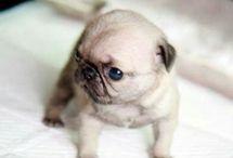 minnie-little)))