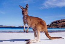 Australia / Our favourite pictures from Down Under!