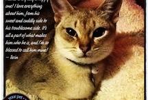 Pet Love Notes