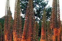 Spennende planter