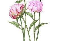 Watercolour Botanicals