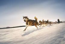 Dog Sledding in the Maine Woods