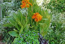 Gardening / by Martha Parker