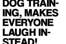 Cosas graciosas que hacen los animales