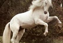 Horse / by Karen Blahova