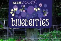~Bleu Berry Hill~