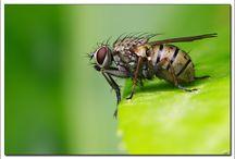 Mouches / Mouches, flies, ...