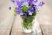 Violets for Christine / Christine is my dear friend. She died in al tragic accident. She loved gardening, wildflowers... and above all violets... for you sweet friend ... May violets always line your path ♡♡♡